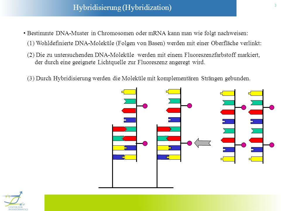 Hybridisierung (Hybridization) 3 Bestimmte DNA-Muster in Chromosomen oder mRNA kann man wie folgt nachweisen: (1) Wohldefinierte DNA-Moleküle (Folgen