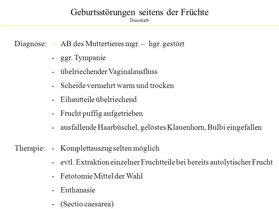 Geburtsstörungen seitens der Früchte Dunstkalb Diagnose:- AB des Muttertieres mgr. – hgr. gestört - ggr. Tympanie - übelriechender Vaginalausfluss - S