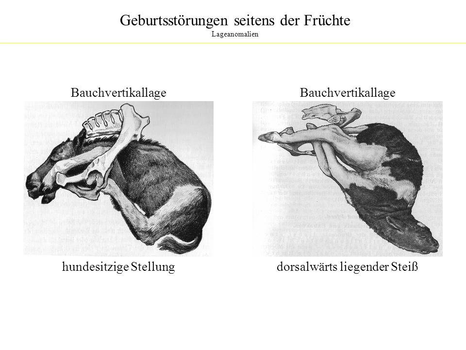 Geburtsstörungen seitens Eihaut und Fruchtwasser Plazentanomalien Placenta diffusa completa: - gelegentlich beim Rind - Plazentome fehlen - große, unregelmäßige Zotten ausgebildet - Geburt normal verlaufend - sub partu schwere, unstillbare Blutungen - mangelnde Öffnung der Zervix Placenta accessoria: - gelegentlich beim Rind - zottenfreie Chorion Verbindung mit Uterus als Placenta diffusa oder mit zahlreichen kleinen Plazentomen (Placenta accessoria) - können zu Blutungen, mangelnde Öffnung der Zervix, Störung des Nachgeburtsabgnages führen