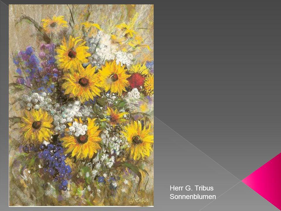 Herr G. Tribus Sonnenblumen
