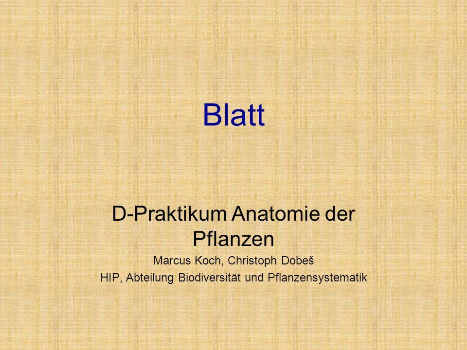 Blatt D-Praktikum Anatomie der Pflanzen Marcus Koch, Christoph Dobeš HIP, Abteilung Biodiversität und Pflanzensystematik