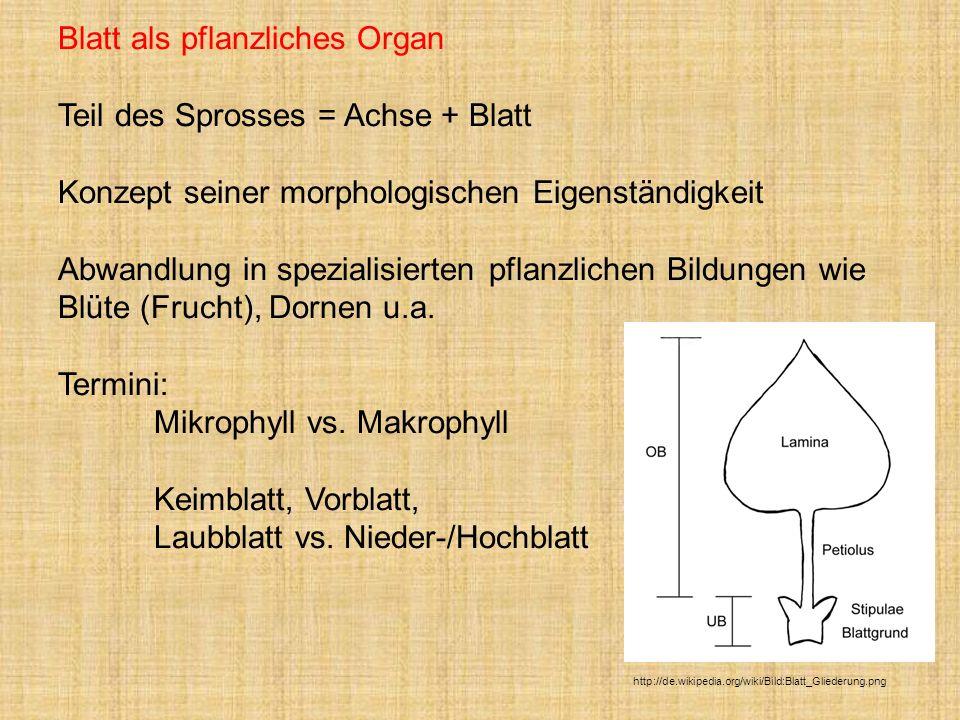 Blatt als pflanzliches Organ Teil des Sprosses = Achse + Blatt Konzept seiner morphologischen Eigenständigkeit Abwandlung in spezialisierten pflanzlic