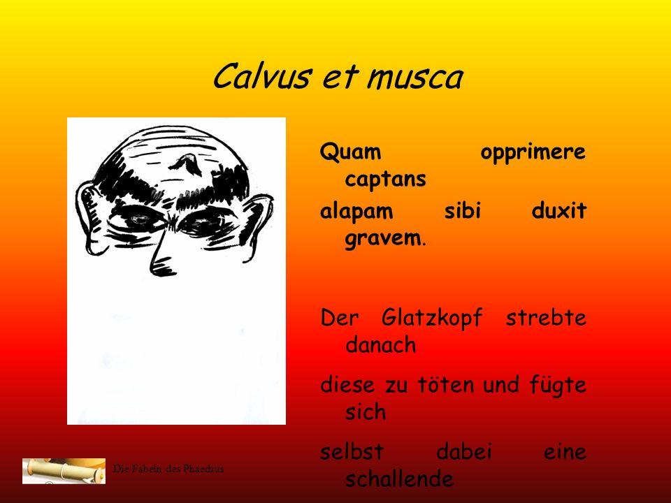 Die Fabeln des Phaedrus Calvus et musca (Stefanie Schülke, Anna Kreyenschmidt, Janina Rücker) Calvi momordit musca nudatum corpus; Eine Mücke stach er