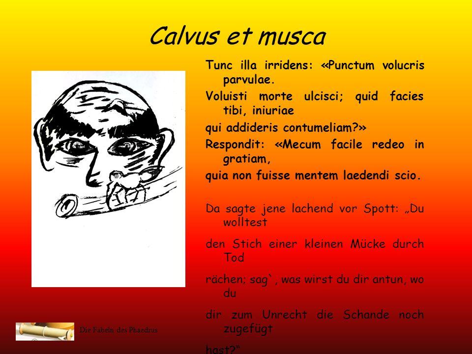 Die Fabeln des Phaedrus Calvus et musca Quam opprimere captans alapam sibi duxit gravem. Der Glatzkopf strebte danach diese zu töten und fügte sich se