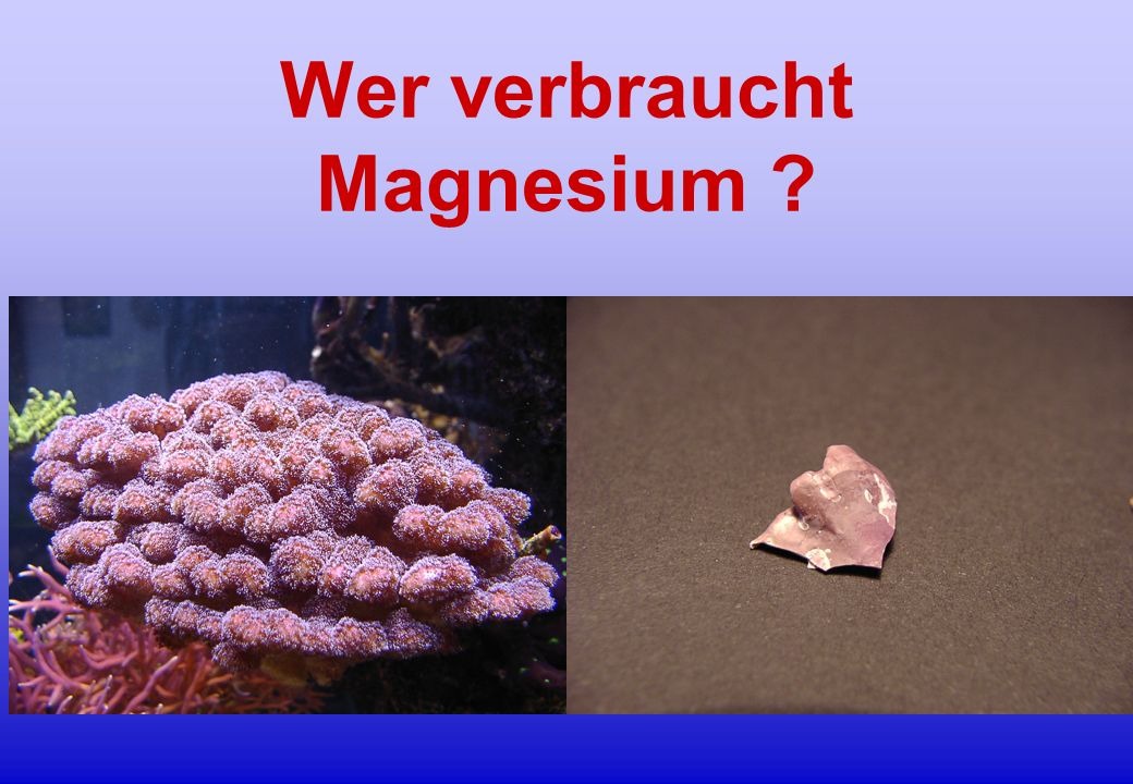 Wer verbraucht Magnesium ?
