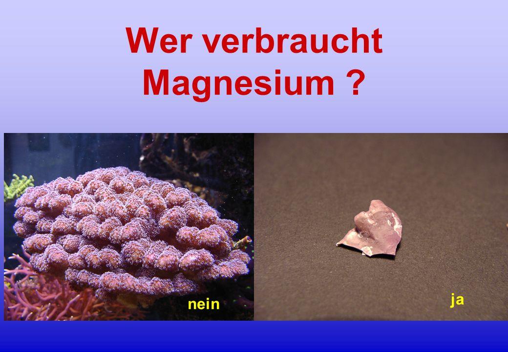 Wer verbraucht Magnesium ? nein ja