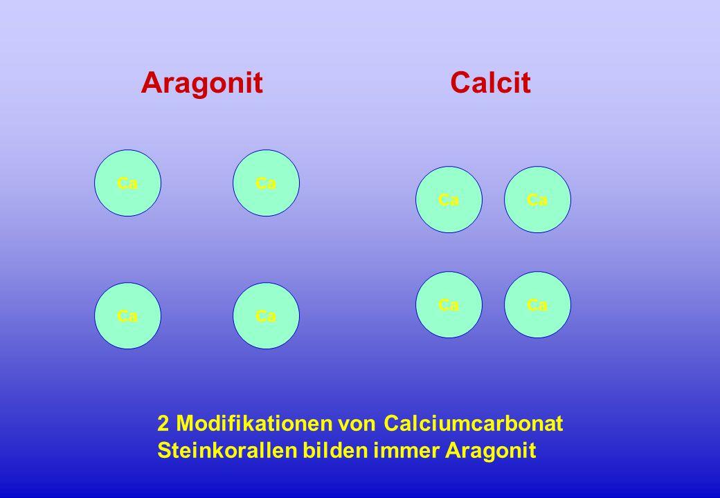 Ca AragonitCalcit 2 Modifikationen von Calciumcarbonat Steinkorallen bilden immer Aragonit