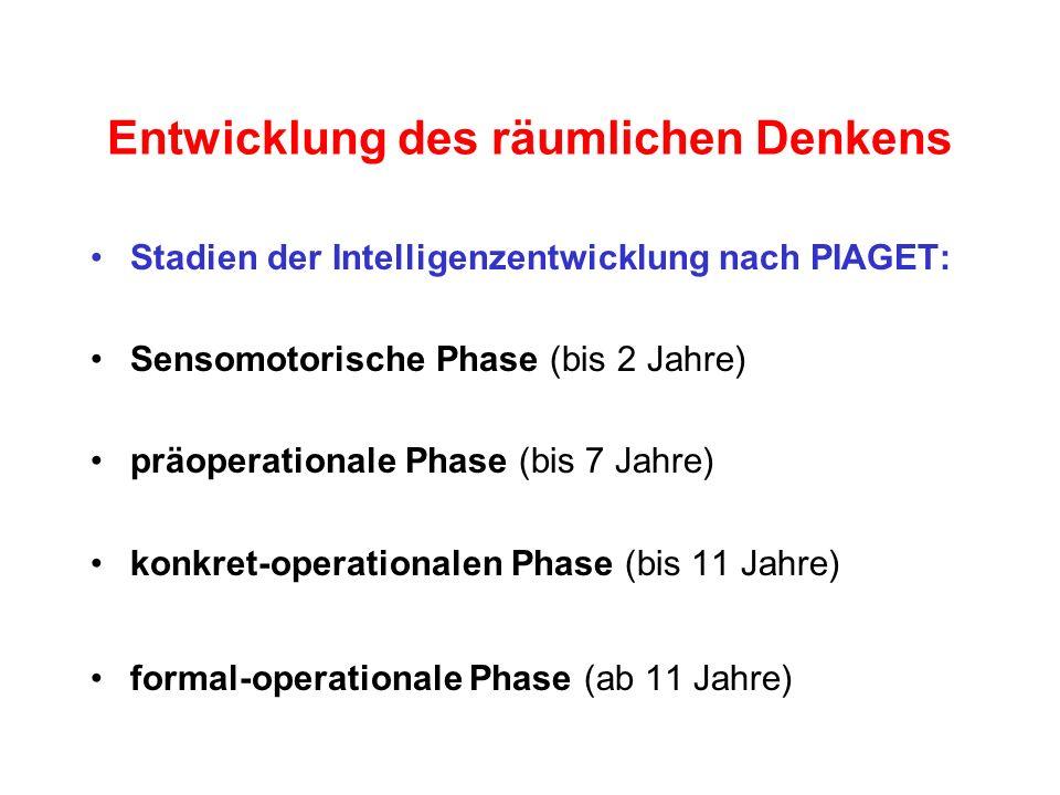 Entwicklung des räumlichen Denkens Stadien der Intelligenzentwicklung nach PIAGET: Sensomotorische Phase (bis 2 Jahre) präoperationale Phase (bis 7 Ja