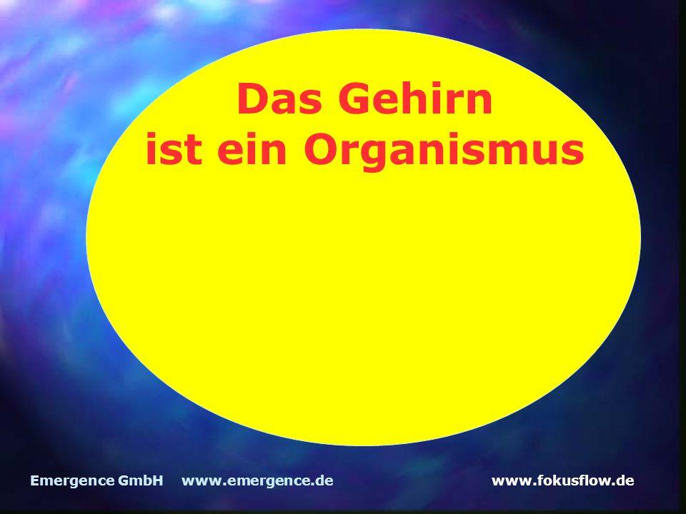www.fokusflow.deEmergence GmbH www.emergence.de Das Gehirn ist ein Organismus