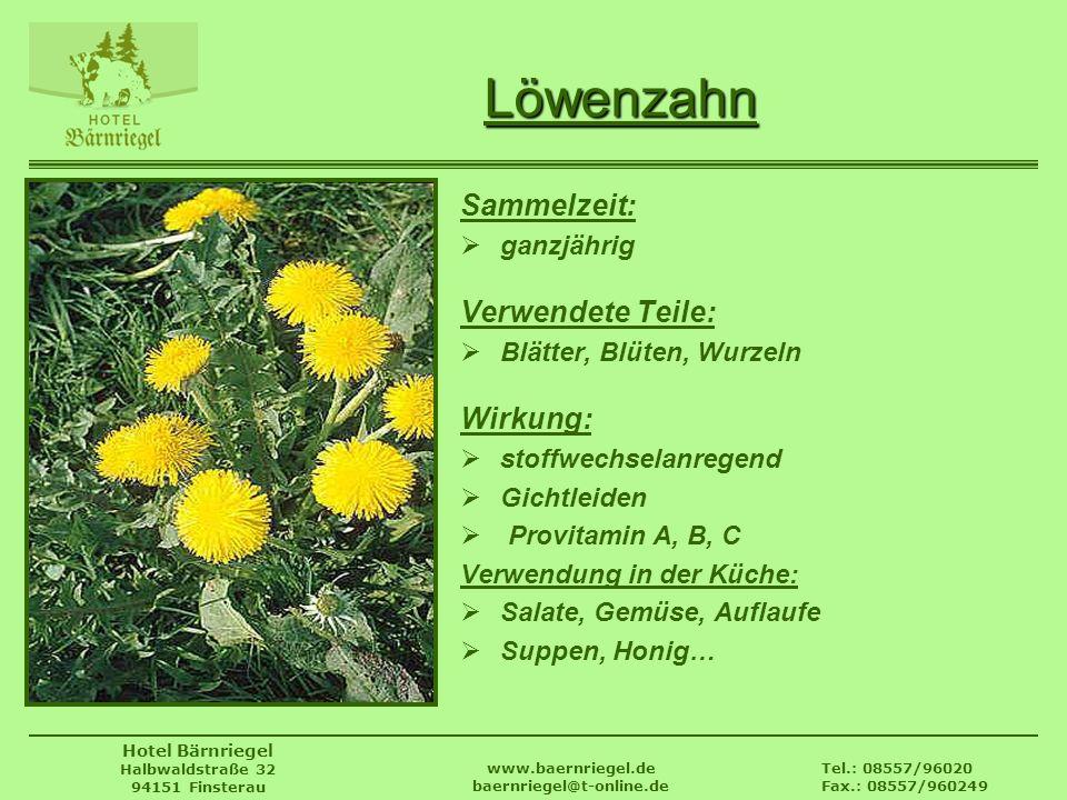 Tel.: 08557/96020 Fax.: 08557/960249 www.baernriegel.de baernriegel@t-online.de Hotel Bärnriegel Halbwaldstraße 32 94151 Finsterau Löwenzahn Sammelzei