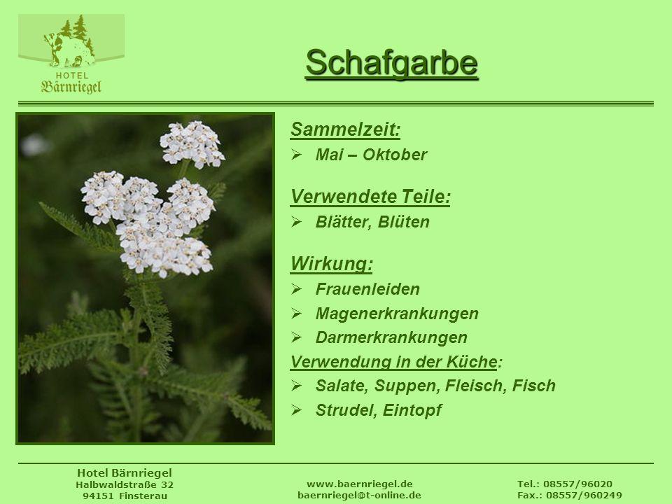 Tel.: 08557/96020 Fax.: 08557/960249 www.baernriegel.de baernriegel@t-online.de Hotel Bärnriegel Halbwaldstraße 32 94151 Finsterau Schafgarbe Sammelze