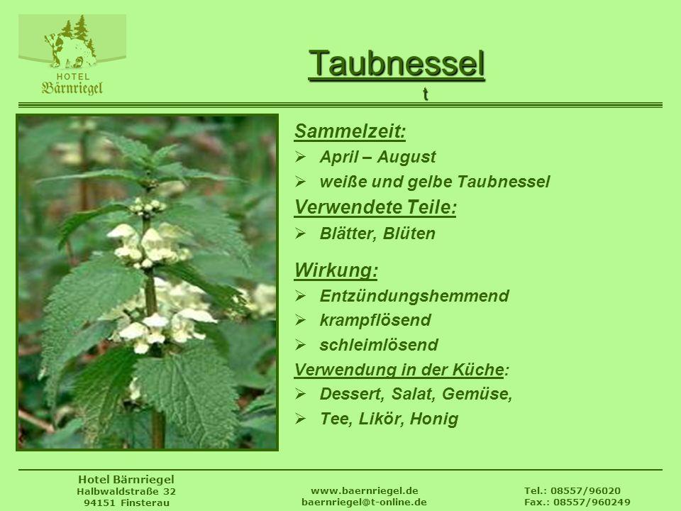 Tel.: 08557/96020 Fax.: 08557/960249 www.baernriegel.de baernriegel@t-online.de Hotel Bärnriegel Halbwaldstraße 32 94151 Finsterau Taubnessel Sammelze