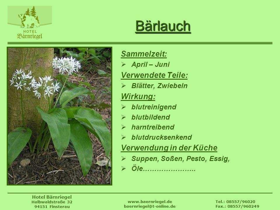 Tel.: 08557/96020 Fax.: 08557/960249 www.baernriegel.de baernriegel@t-online.de Hotel Bärnriegel Halbwaldstraße 32 94151 Finsterau Bärlauch Sammelzeit