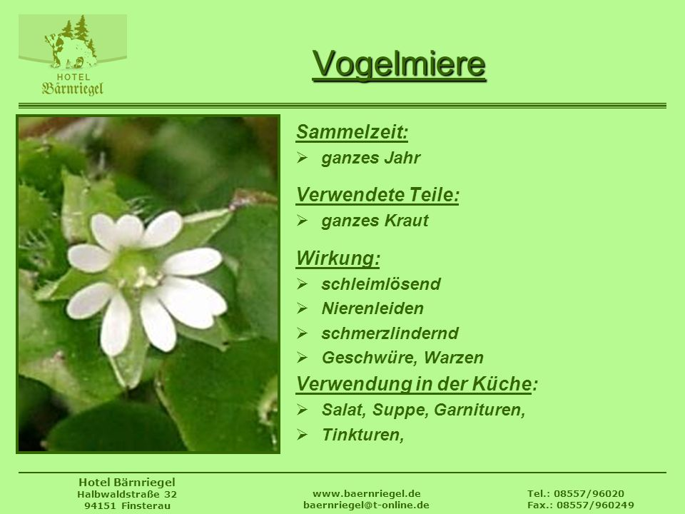 Tel.: 08557/96020 Fax.: 08557/960249 www.baernriegel.de baernriegel@t-online.de Hotel Bärnriegel Halbwaldstraße 32 94151 Finsterau Vogelmiere Sammelze