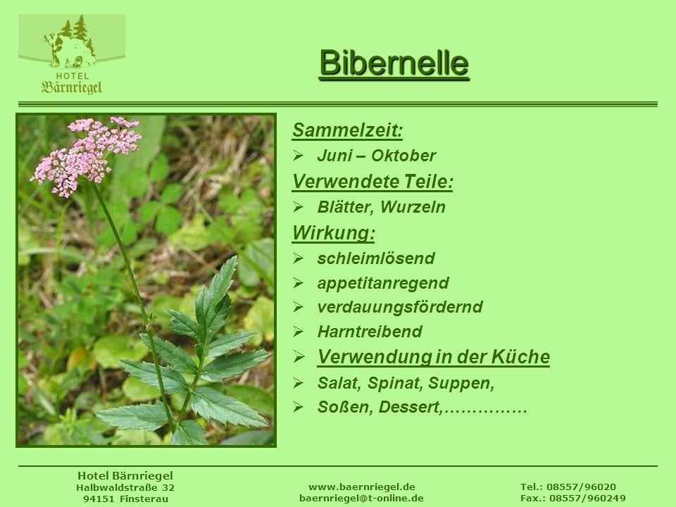 Tel.: 08557/96020 Fax.: 08557/960249 www.baernriegel.de baernriegel@t-online.de Hotel Bärnriegel Halbwaldstraße 32 94151 Finsterau Bibernelle Sammelze