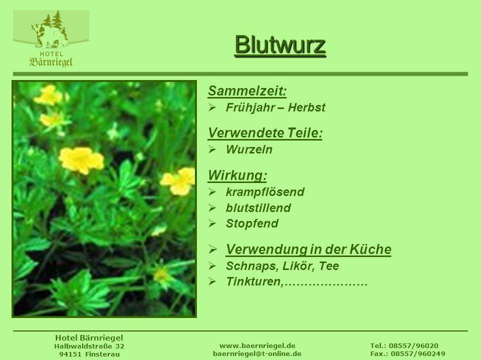 Tel.: 08557/96020 Fax.: 08557/960249 www.baernriegel.de baernriegel@t-online.de Hotel Bärnriegel Halbwaldstraße 32 94151 Finsterau Blutwurz Sammelzeit