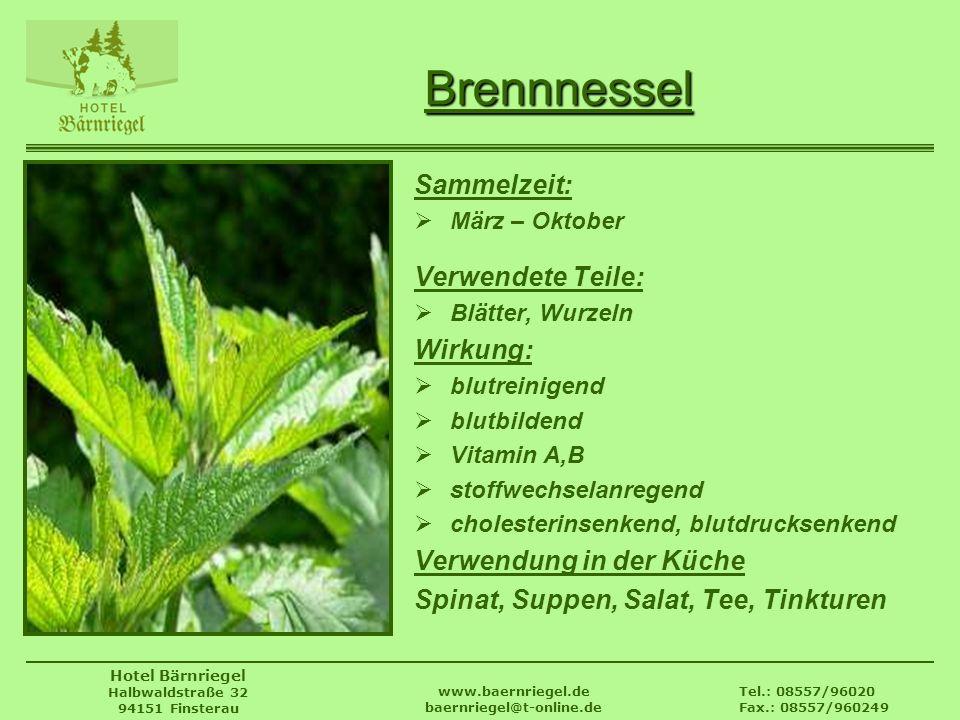 Tel.: 08557/96020 Fax.: 08557/960249 www.baernriegel.de baernriegel@t-online.de Hotel Bärnriegel Halbwaldstraße 32 94151 Finsterau Brennnessel Sammelz