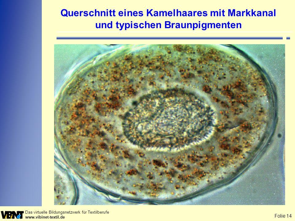 Folie 14 Das virtuelle Bildungsnetzwerk für Textilberufe www.vibinet-textil.de Querschnitt eines Kamelhaares mit Markkanal und typischen Braunpigmente