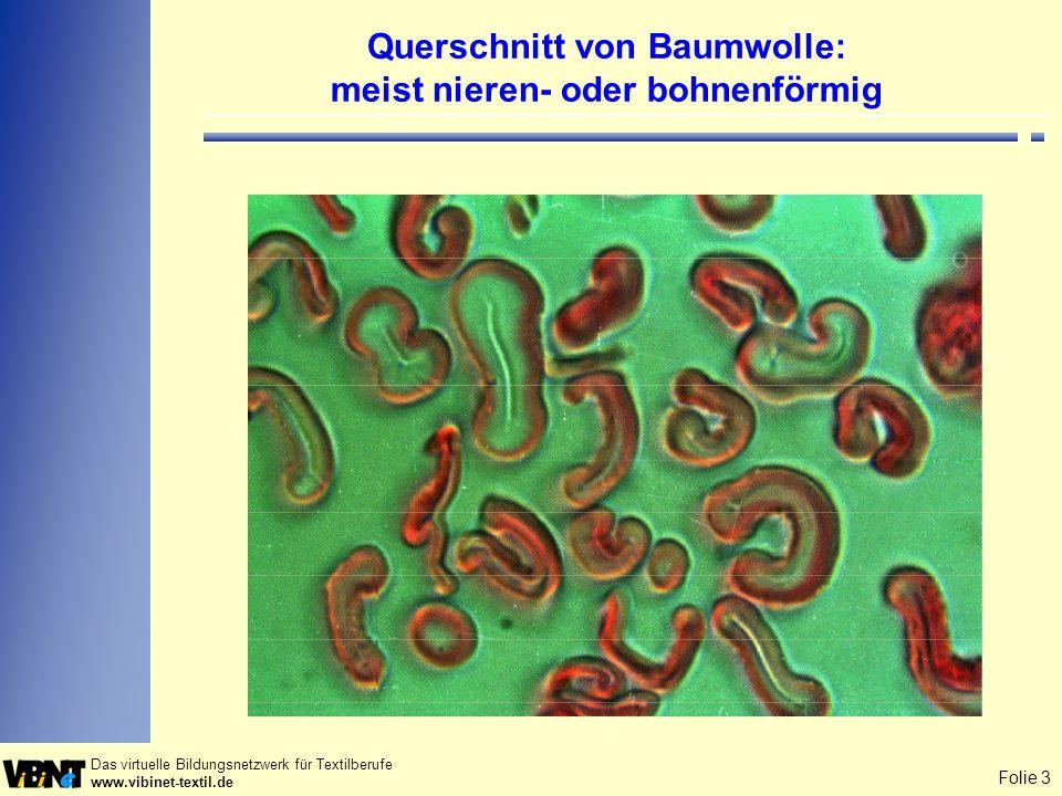 Folie 3 Das virtuelle Bildungsnetzwerk für Textilberufe www.vibinet-textil.de Querschnitt von Baumwolle: meist nieren- oder bohnenförmig