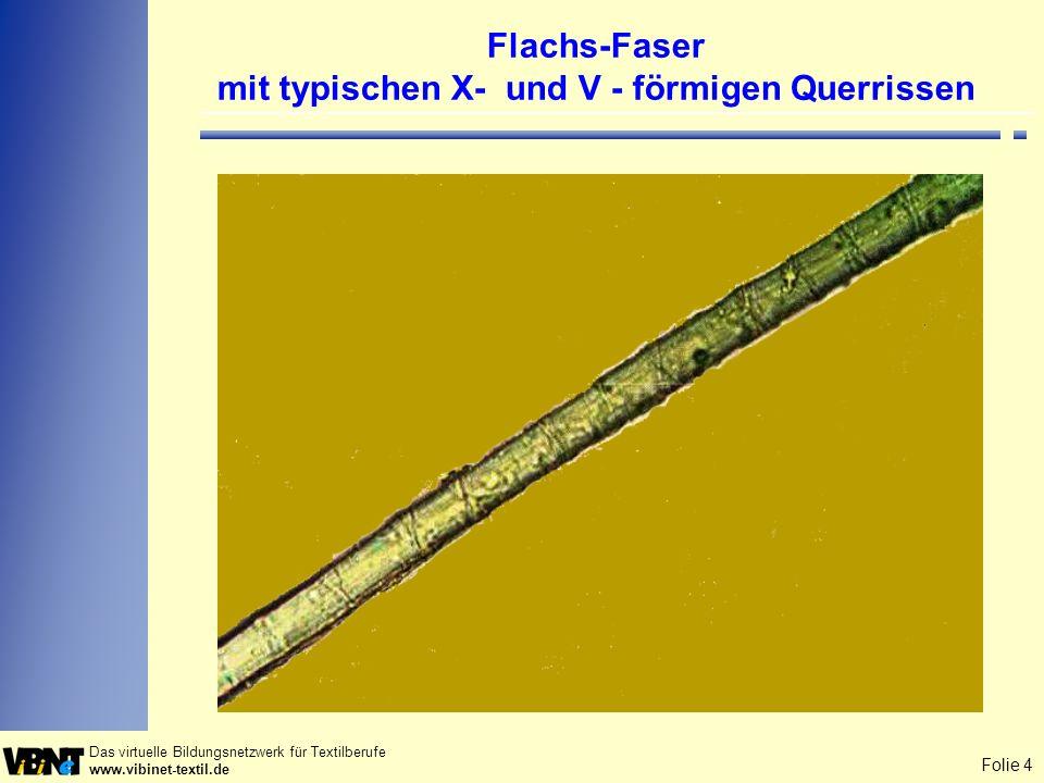 Folie 5 Das virtuelle Bildungsnetzwerk für Textilberufe www.vibinet-textil.de Flachsfasern mit Quetschstelle Rasterelektronenmikroskopie (REM)- Aufnahme des LKA München