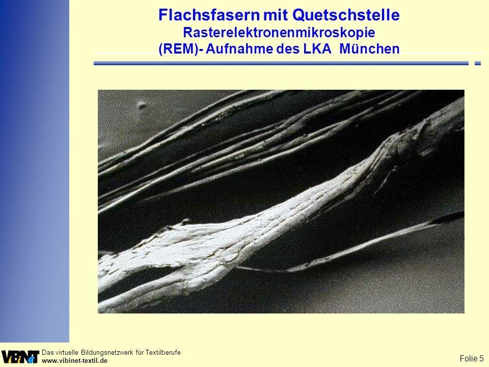 Folie 5 Das virtuelle Bildungsnetzwerk für Textilberufe www.vibinet-textil.de Flachsfasern mit Quetschstelle Rasterelektronenmikroskopie (REM)- Aufnah