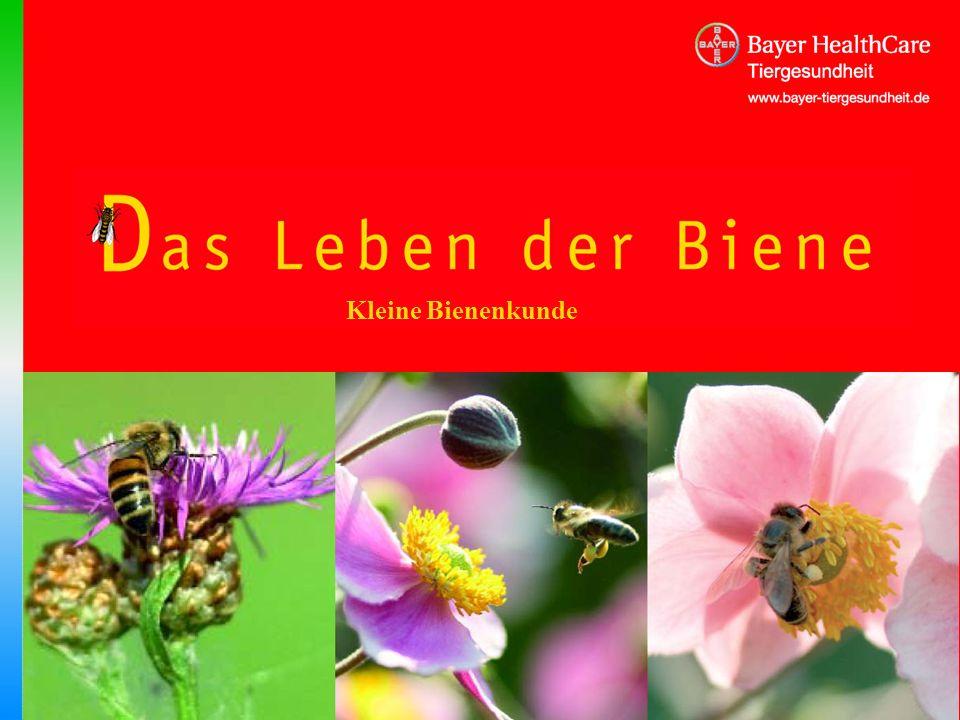 Kleine Bienenkunde Titel