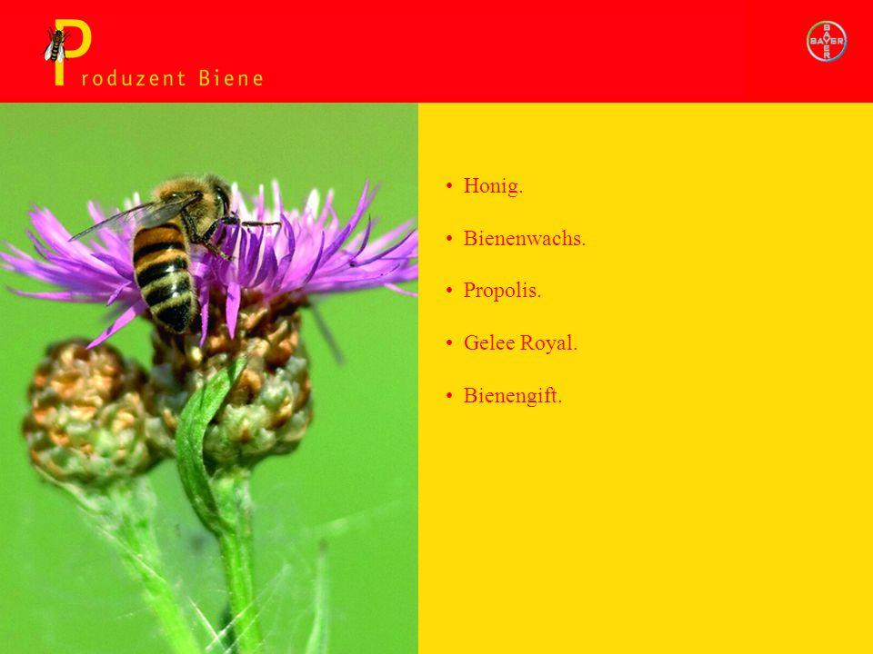 Produzent Biene Bienenwachs. Propolis. Gelee Royal. Bienengift. Honig.