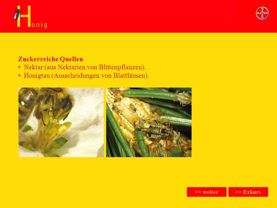 Honig Zuckerreiche Quellen >> Exkurs Zuckerreiche Quellen Nektar (aus Nektarien von Blütenpflanzen). Honigtau (Ausscheidungen von Blattläusen). >> wei