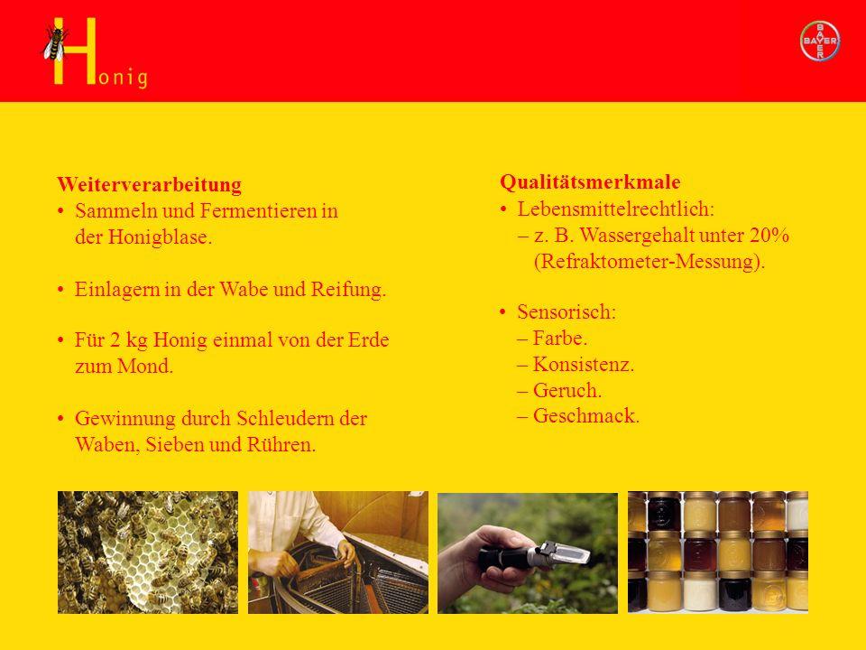 Honig Weiterverarbeitung Sammeln und Fermentieren in der Honigblase. Lebensmittelrechtlich: – z. B. Wassergehalt unter 20% (Refraktometer-Messung). Ge