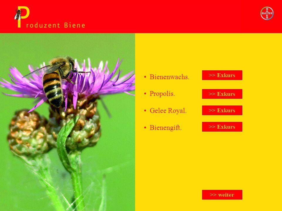 Produzent Biene Exkurs Bienenwachs. Propolis. Gelee Royal. Bienengift. >> Exkurs >> weiter