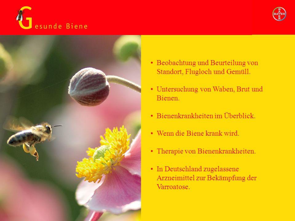 Gesunde Biene Beobachtung und Beurteilung von Standort, Flugloch und Gemüll. Untersuchung von Waben, Brut und Bienen. Bienenkrankheiten im Überblick.