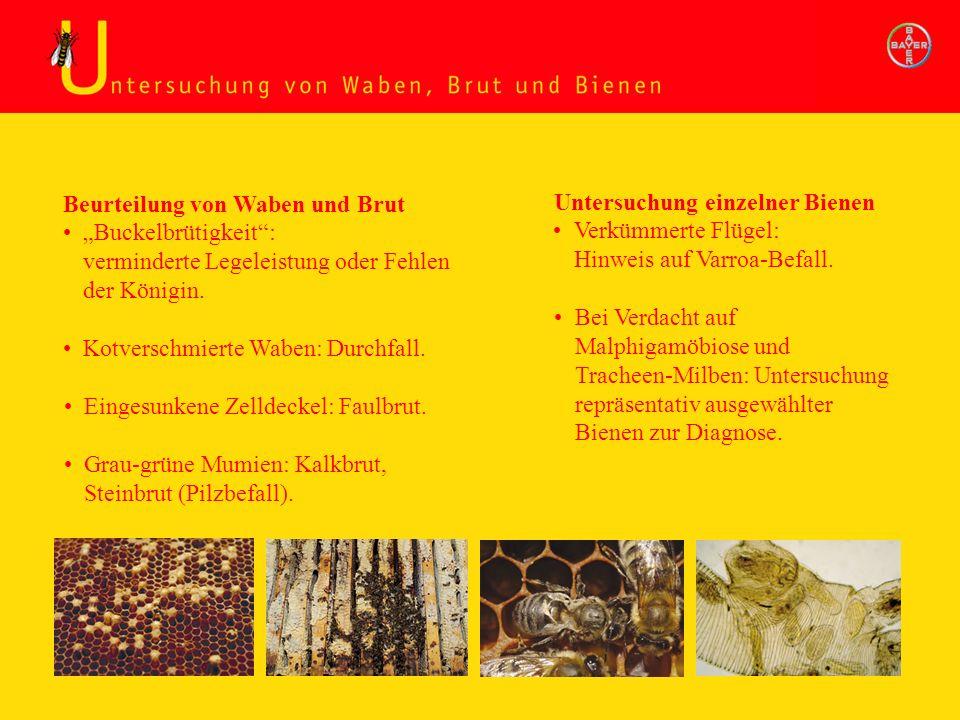 Untersuchung Waben, Brut und Bienen Beurteilung von Waben und Brut Untersuchung einzelner Bienen Kotverschmierte Waben: Durchfall. Bei Verdacht auf Ma