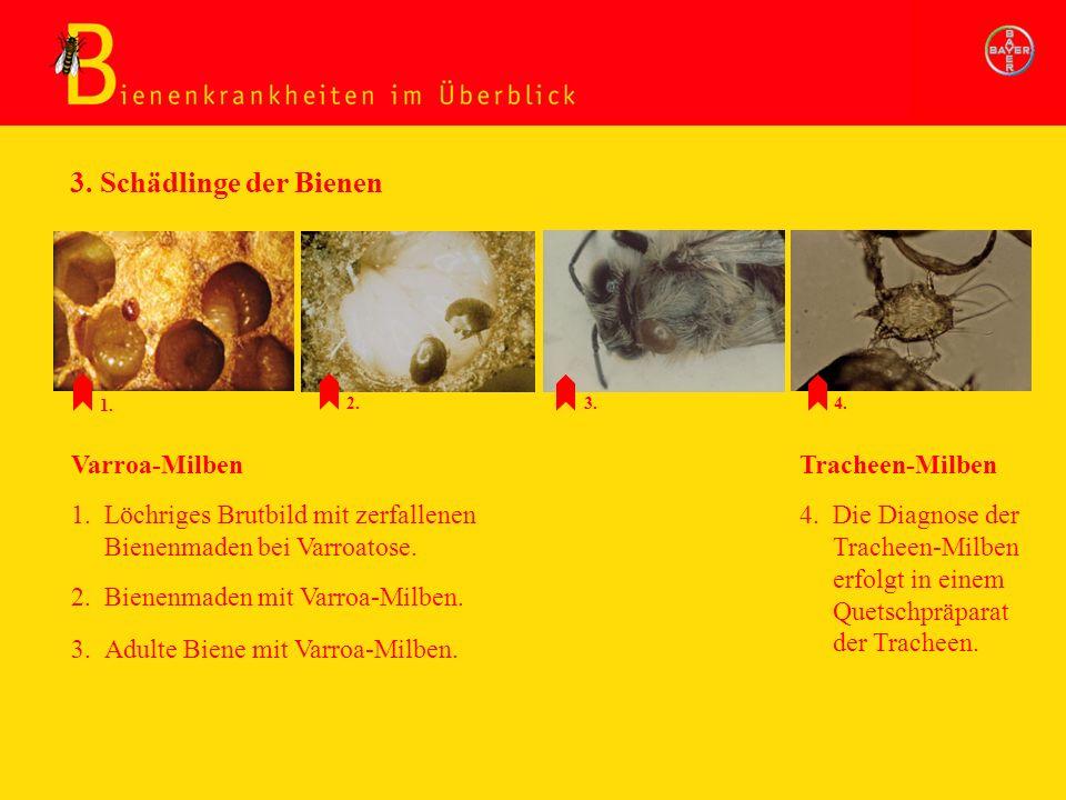 3. Schädlinge der Bienen 1. Löchriges Brutbild mit zerfallenen Bienenmaden bei Varroatose. 2. Bienenmaden mit Varroa-Milben. Varroa-Milben 4. Die Diag