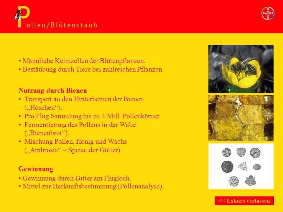 Gewinnung durch Gitter am Flugloch. Nutzung durch Bienen Transport an den Hinterbeinen der Bienen (Höschen). Pro Flug Sammlung bis zu 4 Mill. Pollenkö