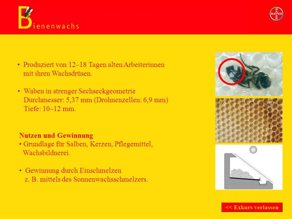 Nutzen und Gewinnung Produziert von 12–18 Tagen alten Arbeiterinnen mit ihren Wachsdrüsen. Waben in strenger Sechseckgeometrie Durchmesser: 5,37 mm (D