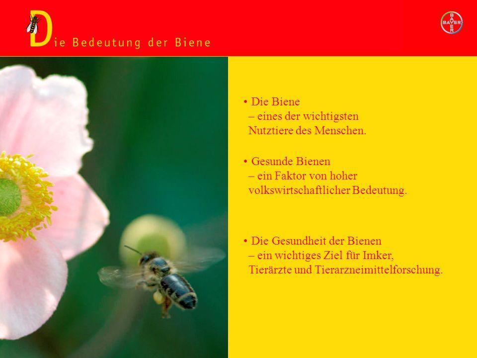 Die Bedeutung der Biene Gesunde Bienen – ein Faktor von hoher volkswirtschaftlicher Bedeutung. Die Biene – eines der wichtigsten Nutztiere des Mensche