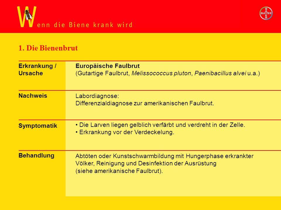 1. Die Bienenbrut Erkrankung / Ursache Nachweis Symptomatik Behandlung Europäische Faulbrut (Gutartige Faulbrut, Melissococcus pluton, Paenibacillus a