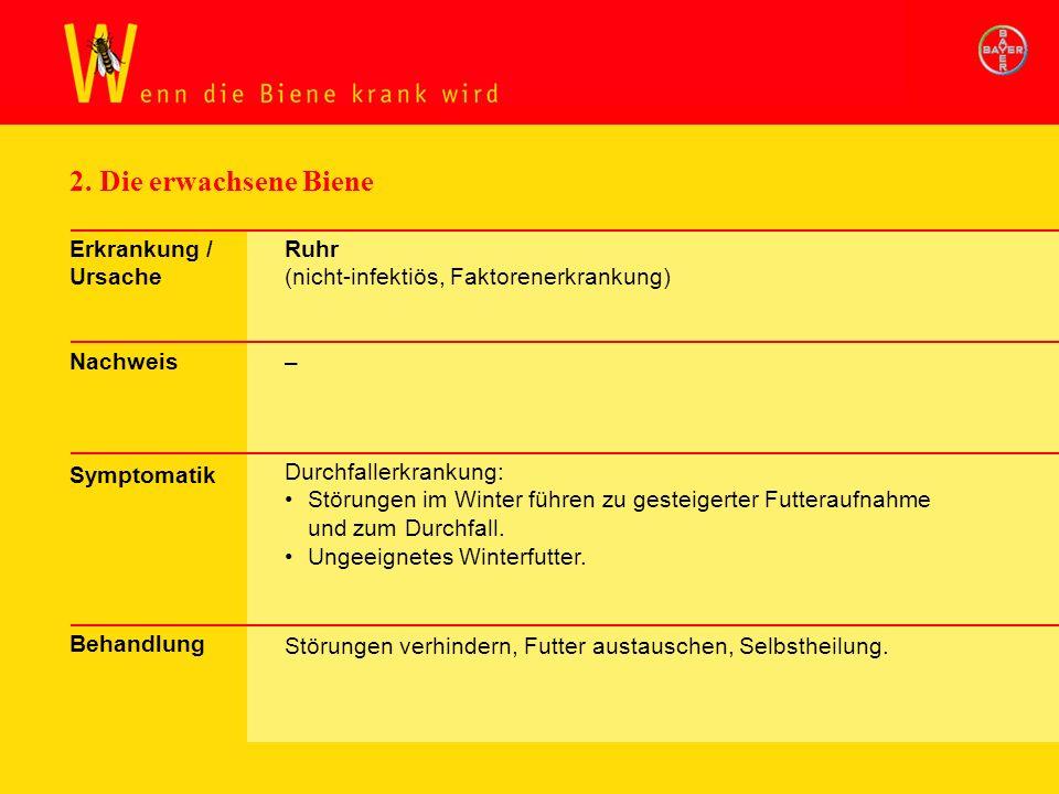 2. Die erwachsene Biene Erkrankung / Ursache Nachweis Symptomatik Behandlung Ruhr (nicht-infektiös, Faktorenerkrankung) – Durchfallerkrankung: Störung