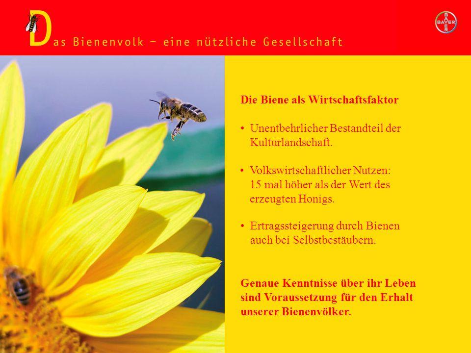 Bienenvolk - nützliche Gesellschaft Die Biene als Wirtschaftsfaktor Unentbehrlicher Bestandteil der Kulturlandschaft. Volkswirtschaftlicher Nutzen: 15