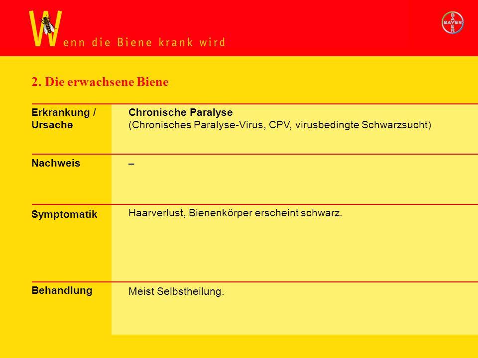 2. Die erwachsene Biene Erkrankung / Ursache Nachweis Symptomatik Behandlung Chronische Paralyse (Chronisches Paralyse-Virus, CPV, virusbedingte Schwa