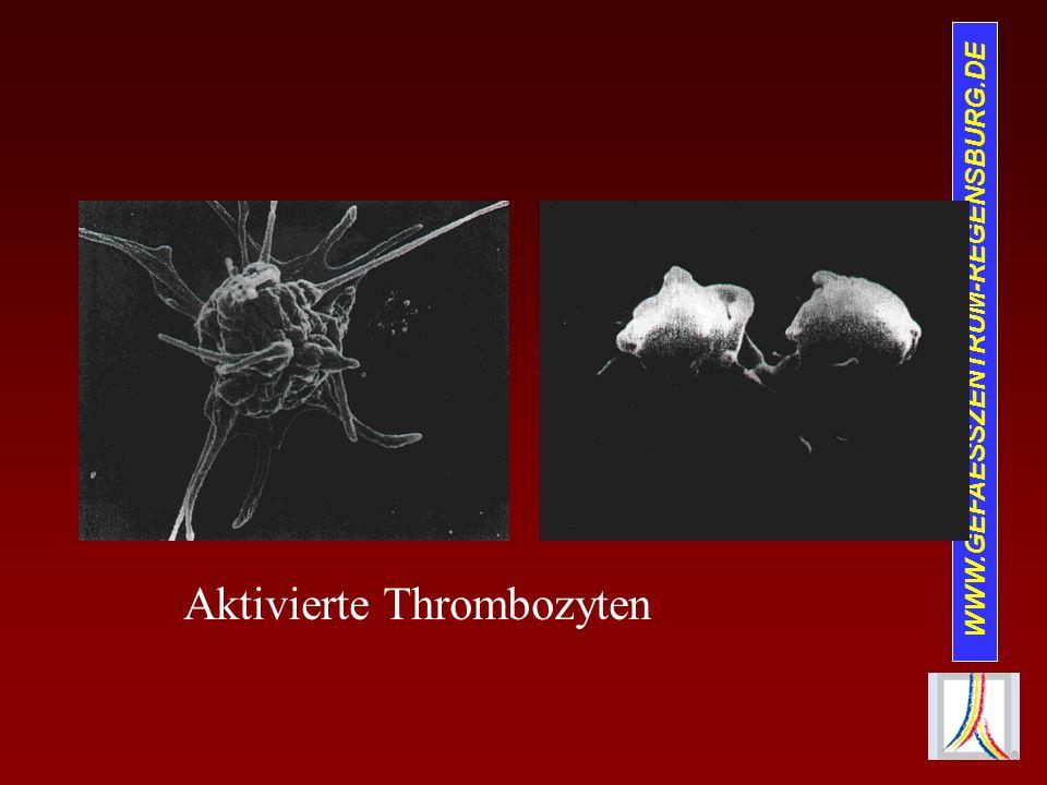 Aktivierte Thrombozyten
