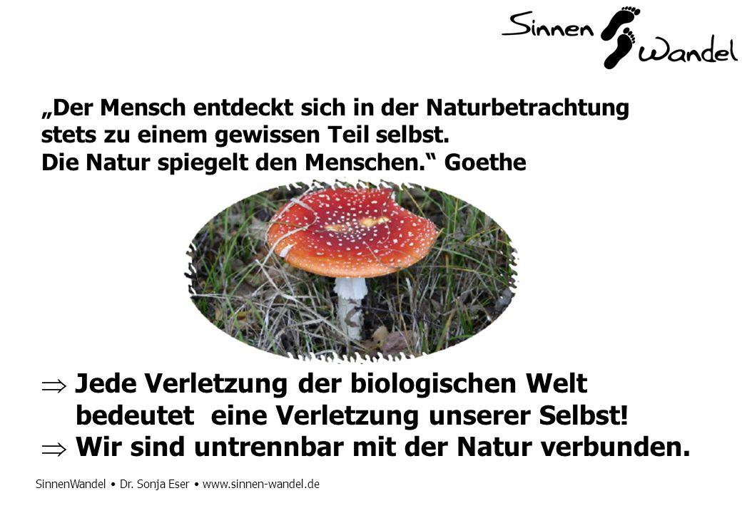 SinnenWandel Dr. Sonja Eser www.sinnen-wandel.de Der Mensch entdeckt sich in der Naturbetrachtung stets zu einem gewissen Teil selbst. Die Natur spieg