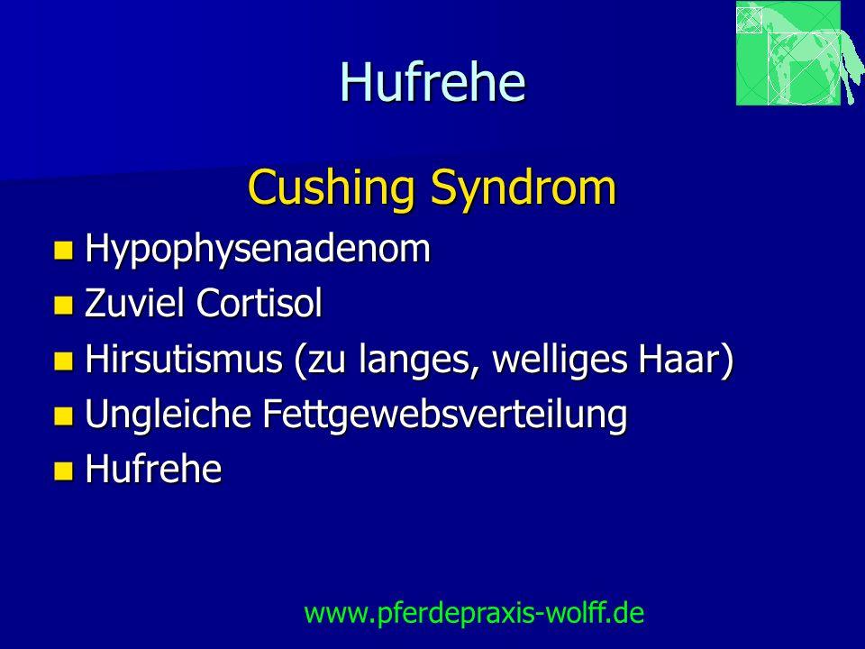 Hufrehe Cushing Syndrom Hypophysenadenom Hypophysenadenom Zuviel Cortisol Zuviel Cortisol Hirsutismus (zu langes, welliges Haar) Hirsutismus (zu lange