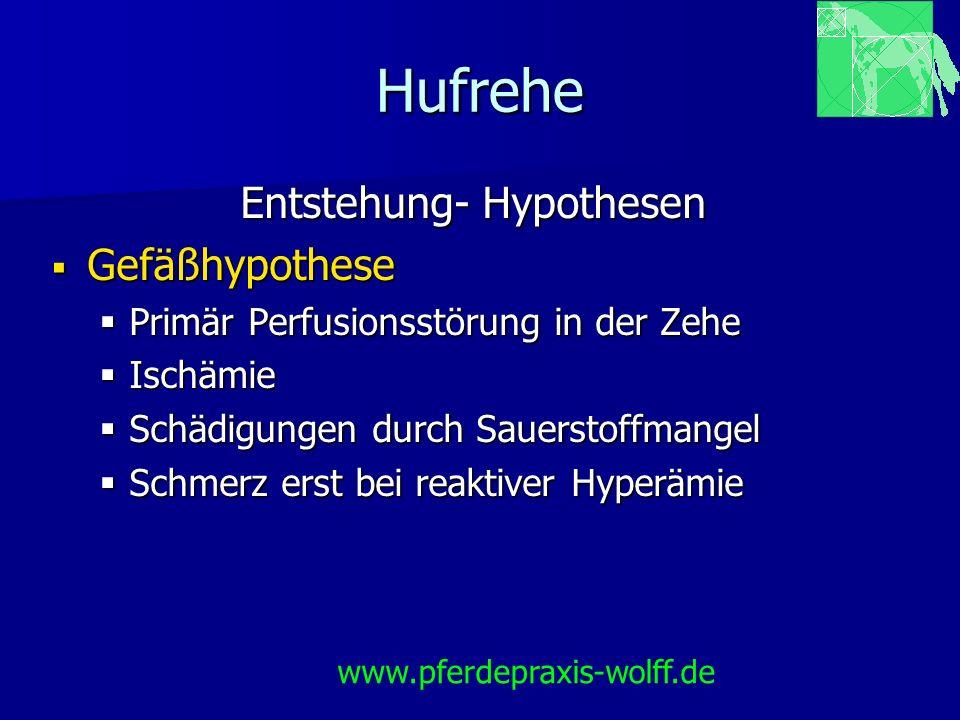 Hufrehe Entstehung- Hypothesen Gefäßhypothese Gefäßhypothese Primär Perfusionsstörung in der Zehe Primär Perfusionsstörung in der Zehe Ischämie Ischäm