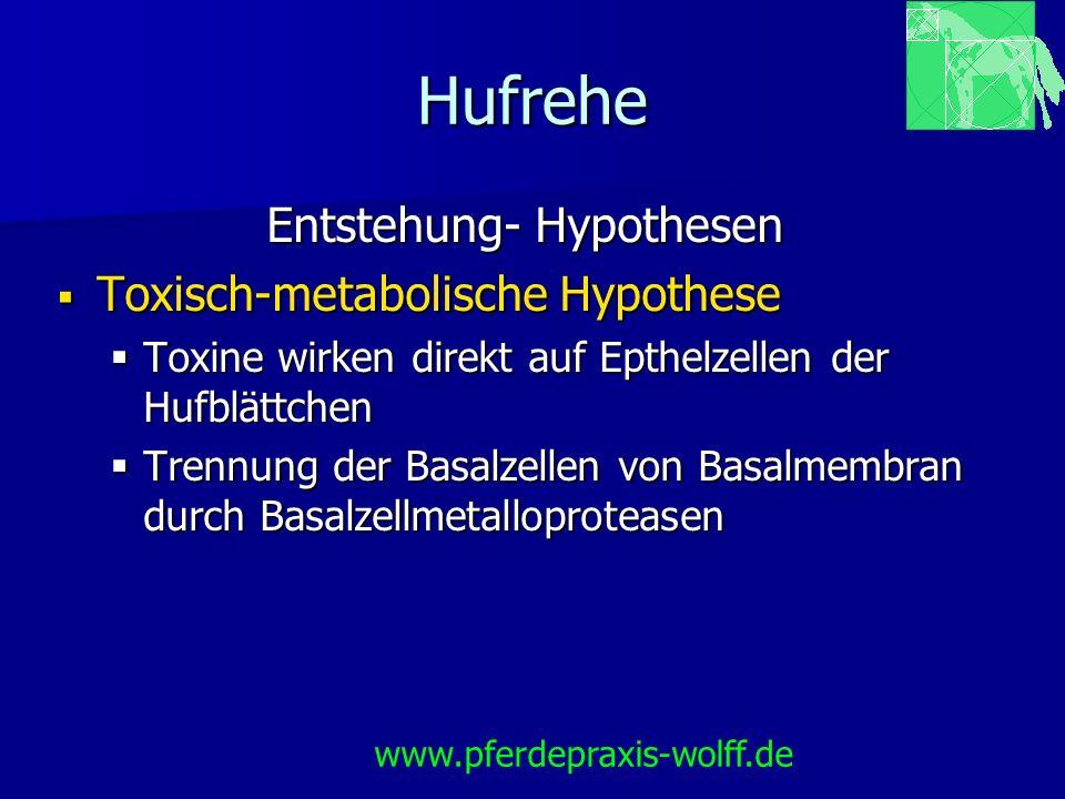 Hufrehe Entstehung- Hypothesen Toxisch-metabolische Hypothese Toxisch-metabolische Hypothese Toxine wirken direkt auf Epthelzellen der Hufblättchen To