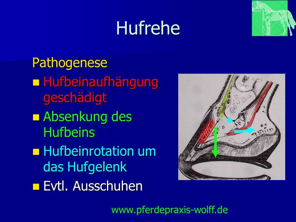 Hufrehe Pathogenese Hufbeinaufhängung geschädigt Hufbeinaufhängung geschädigt Absenkung des Hufbeins Absenkung des Hufbeins Hufbeinrotation um das Huf
