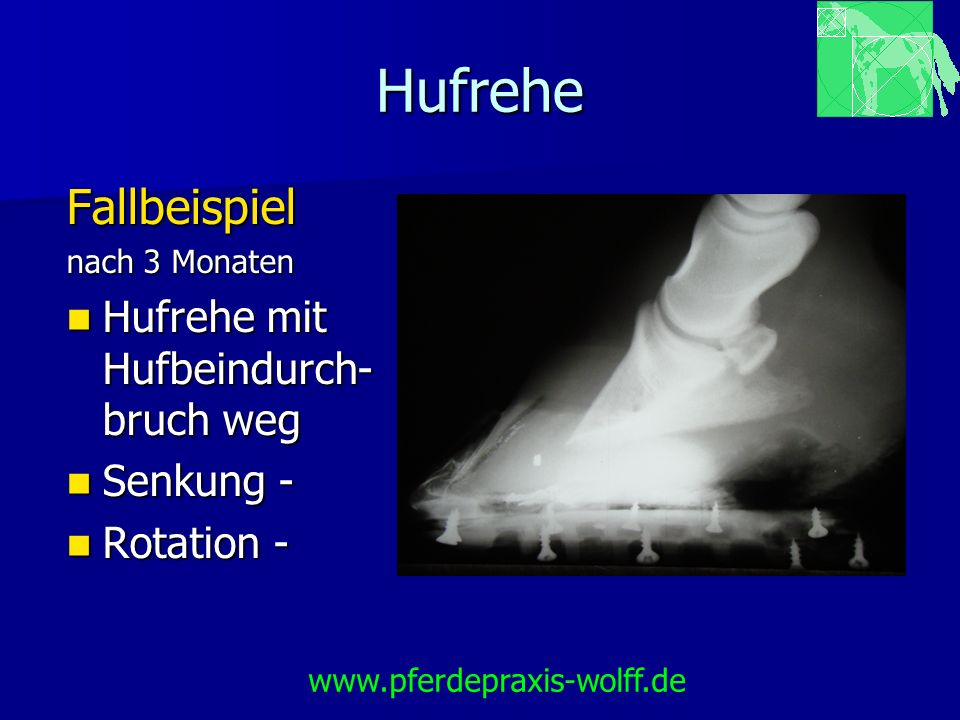Hufrehe Fallbeispiel nach 3 Monaten Hufrehe mit Hufbeindurch- bruch weg Hufrehe mit Hufbeindurch- bruch weg Senkung - Senkung - Rotation - Rotation -