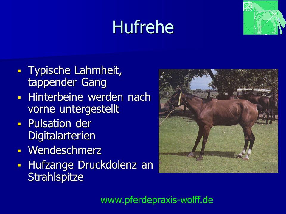 Hufrehe Chronische Hufrehe Drehung und Senkung diagnostizierbar Drehung und Senkung diagnostizierbar Schäden am Hufbeinauf- hängeapparat Schäden am Hufbeinauf- hängeapparat www.pferdepraxis-wolff.de