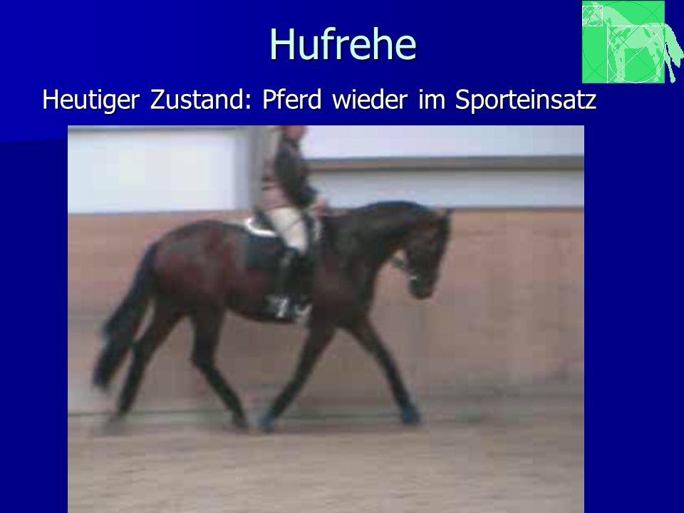 Hufrehe Heutiger Zustand: Pferd wieder im Sporteinsatz www.pferdepraxis-wolff.de