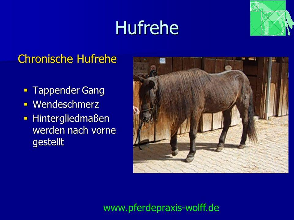 Hufrehe Ursachen Mechanische Rehe Belastungsrehe Belastungsrehe traumatische Hufrehe (selten) traumatische Hufrehe (selten) Marschrehe (selten) Marschrehe (selten) www.pferdepraxis-wolff.de